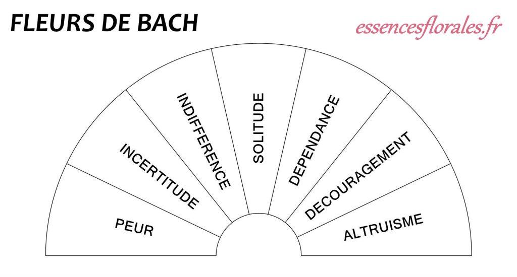 Planches Pendule Fleurs de Bach