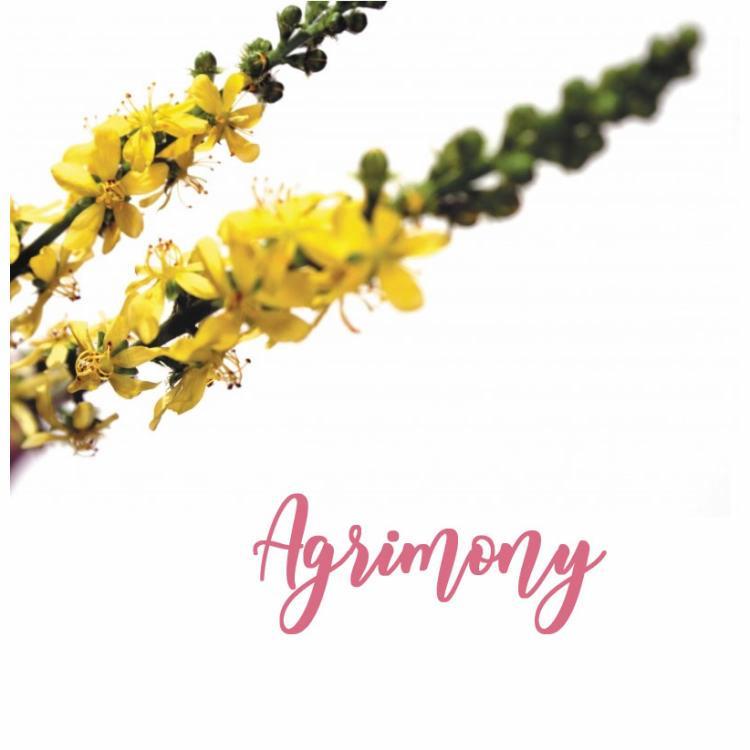 Fleur de Bach Agrimony Aigremoine
