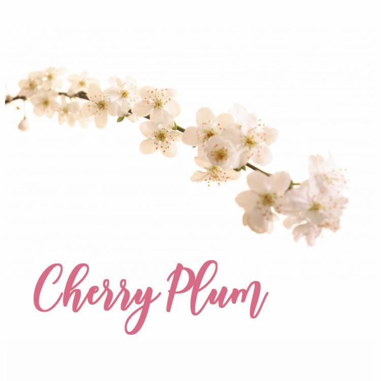Fleur de Bach Cherry Plum Prunier Myrobolan