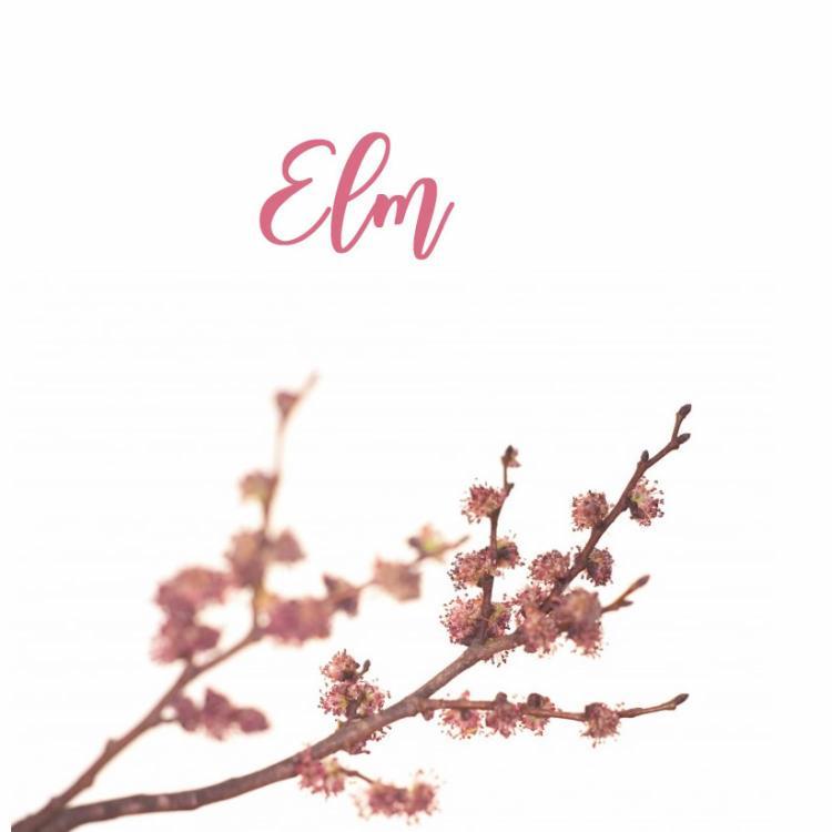 Fleur de Bach Elm Orme