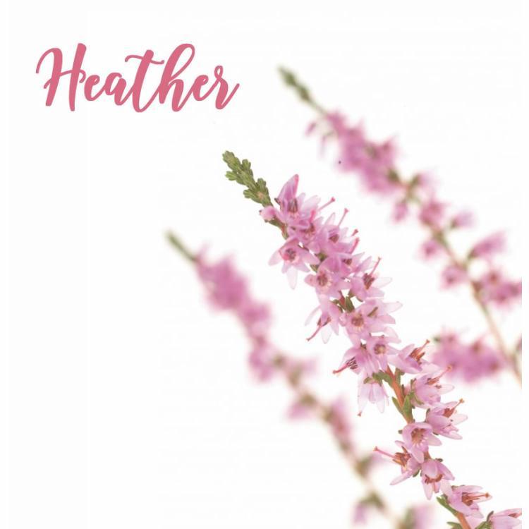 Fleur de Bach Heather Bruyère