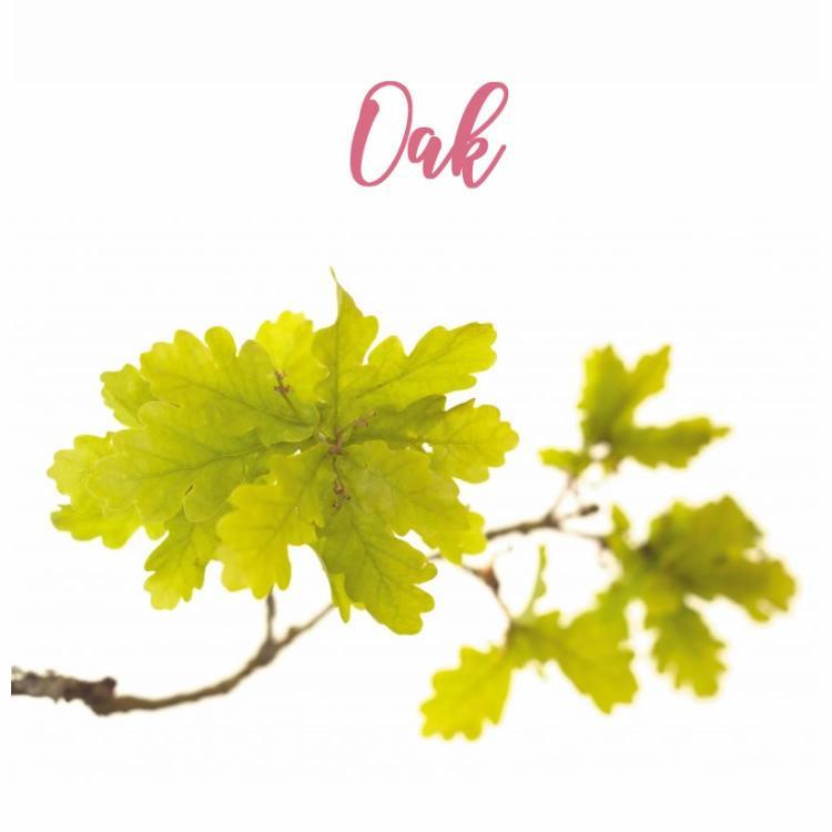 Fleur de Bach Oak Chêne