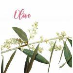Fleur de Bach Olive Olivier