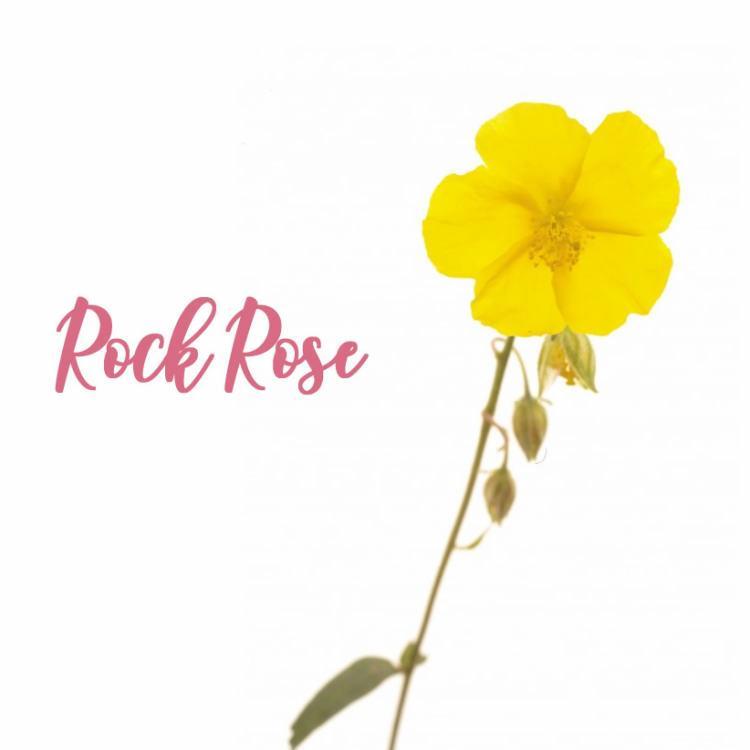 Liste des Fleurs de Bach : Rock Rose Hélianthème