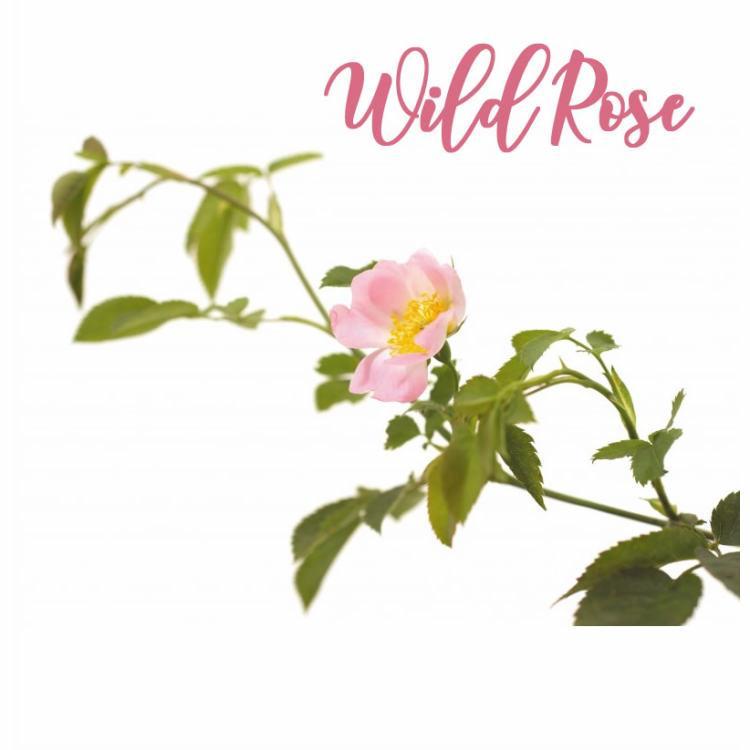 Fleur de Bach Wild Rose Eglantine